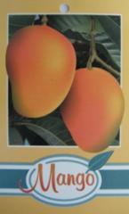 Mango Trees Rande