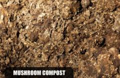 Soils and Mulches