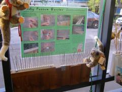 Pesky Possum Barriers