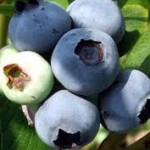 Blueberries Selection