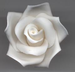 Open medium rose