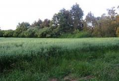 Broadacre Crops