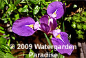 Water Irises Range