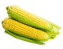 Delicious Sweet Corn