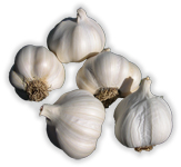 Premium Fresh Garlic
