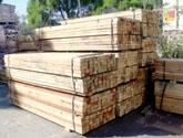 Wholesale timber