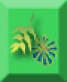 Folliage Plants