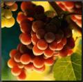 2002 Cabernet Sauvignon Wine