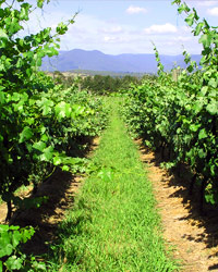 Order Winery Tours