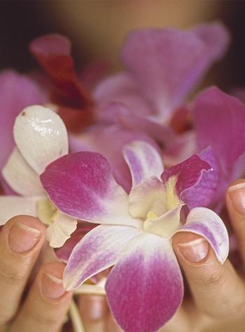 Order Exotic Frangipani Manicure