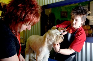 Order Introduction to Dog Grooming