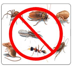 Order Commercial Pest Control Brisbane