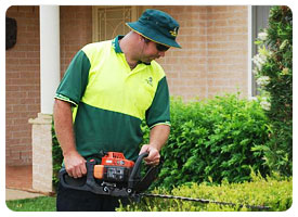 Order Hedging, Pruning & Tree Removal