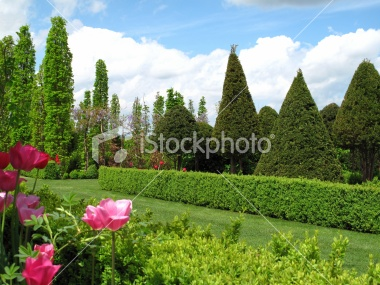 Order General Garden Maintenance
