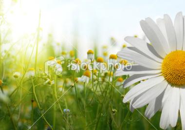 Order Fertilizing Service