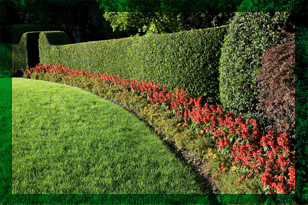 Order Care for Your Garden