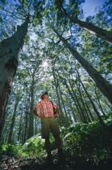 Blackwood Forest & Rivers Scenic Tour