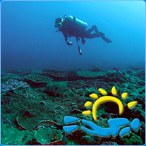 Local Reef Trips