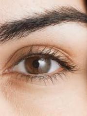 Eye-brow tint
