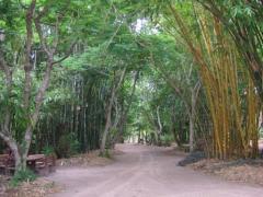 A bamboo paradise