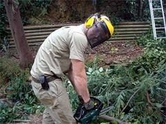 Tree Pruning and Shaping