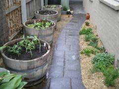 Wine Barrel Gardens